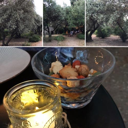 OLIVAR DE CASTILLEJO | Olivar escondido en pleno centro de Madrid